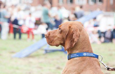 Tag der offenen Tür 2015: THW Hundestaffel